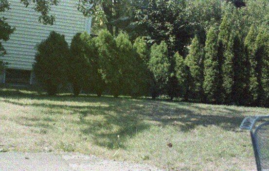 backyard530